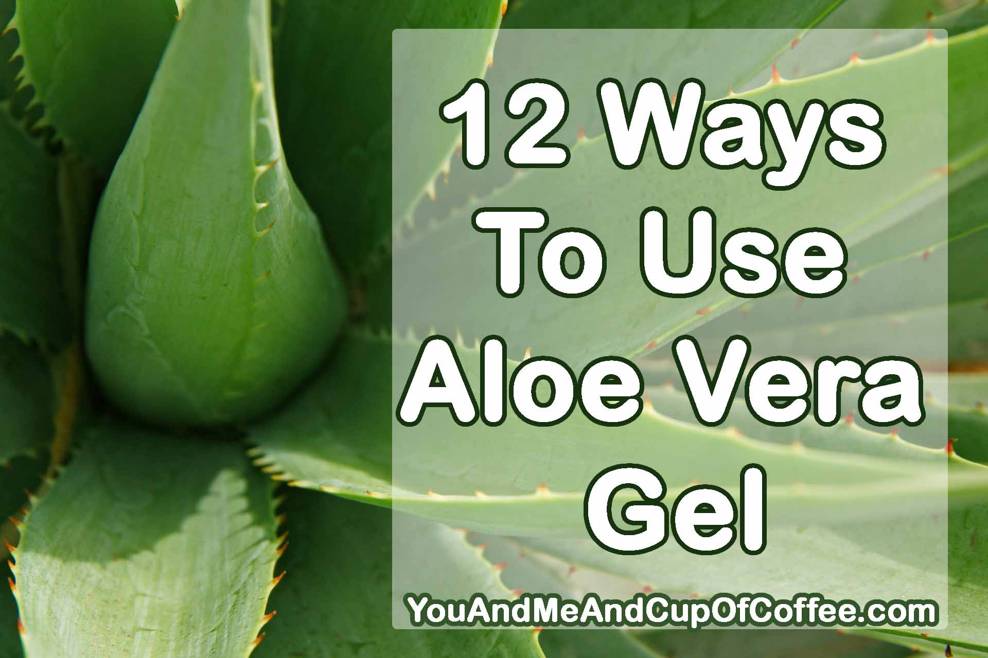 12 Common And Not So Common Ways To Use Aloe Vera Gel You And Me And Cup Of Coffee